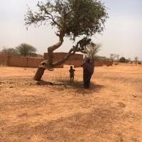 2016 SETZLING (Bäumchen) PFLANZUNG IN NIGER