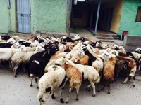2014 SACRIFICE (KURBAN) MEAT AID